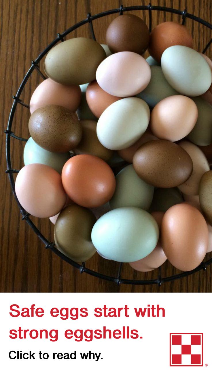 importance of chicken egg shell pdf