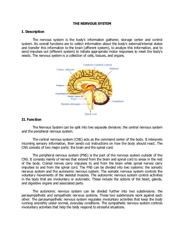 nervous system parts functions and diseases pdf