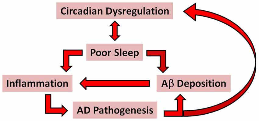 neurobiology of sleep and circadian rhythms impact factor pdf